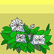 Cg120523