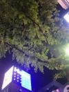 Photo_289